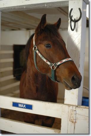 Max at Graceland